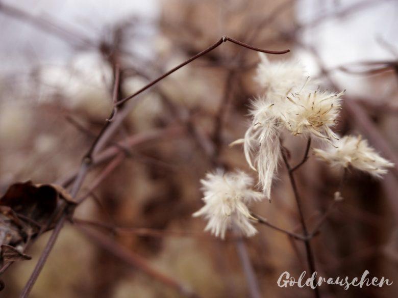 Goldrauschen Blog