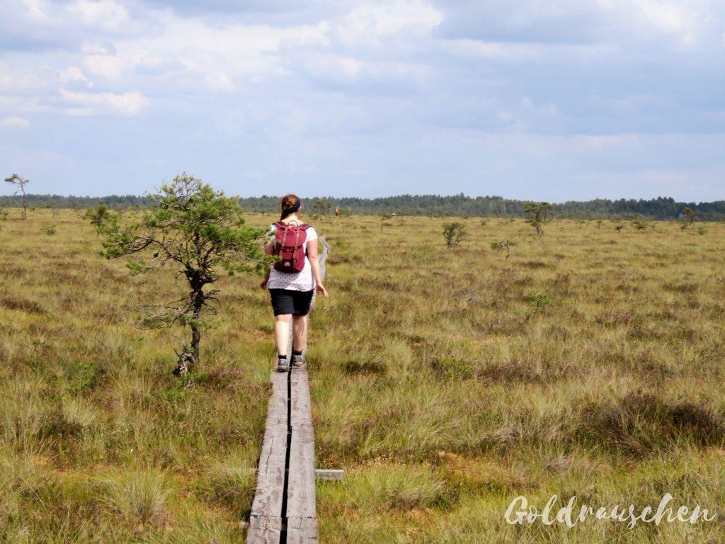 Wandern im Store Mosse Nationalpark