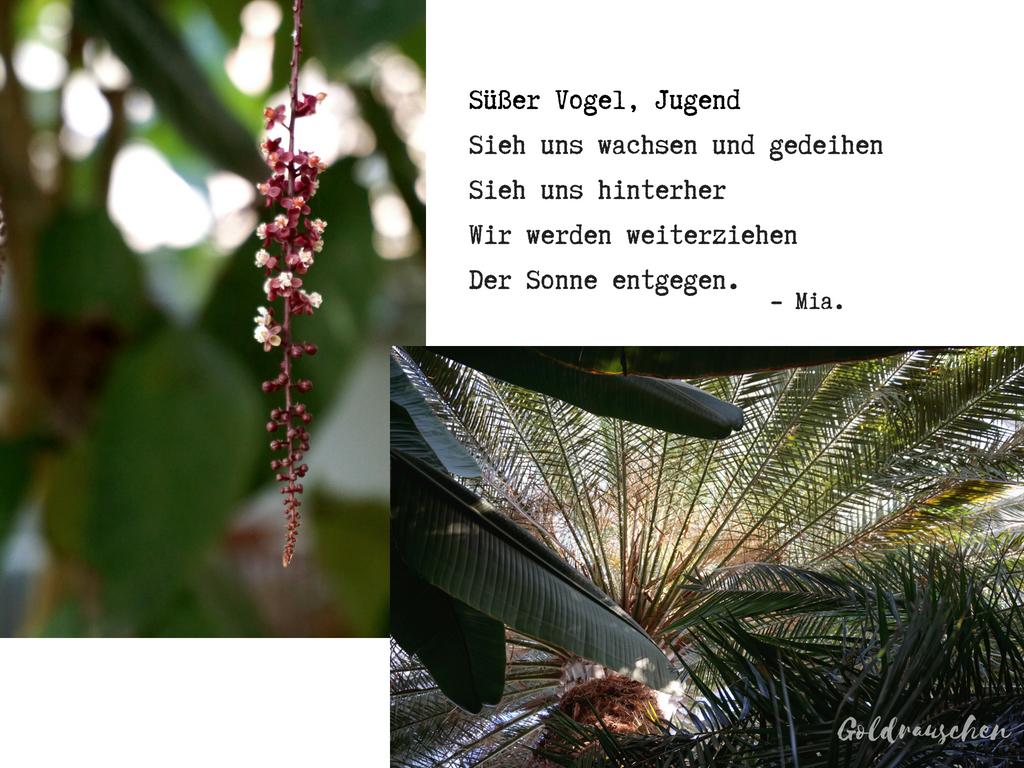 Sommer Im Winter Die Gruson Gewachshauser In Magdeburg